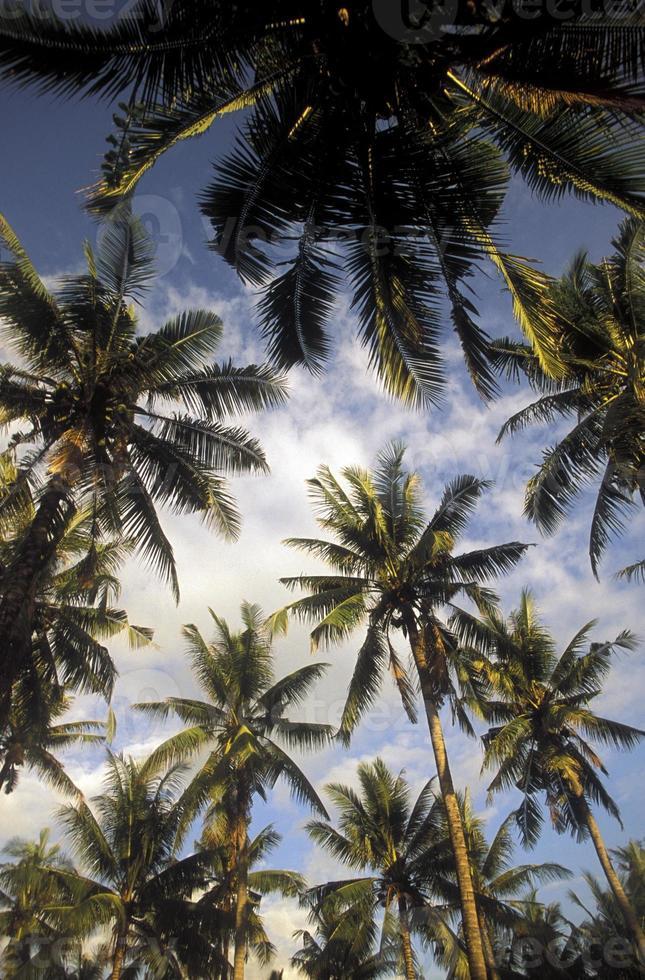 Asien Bali Palmtree Plantage foto