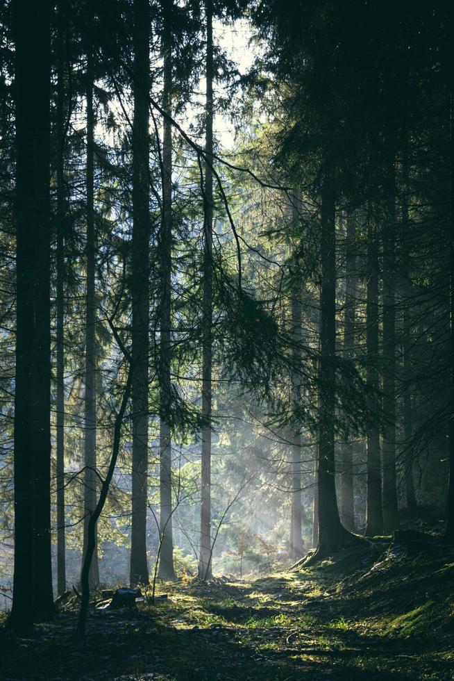 Nebel durchnässter Wald in Tschechien foto