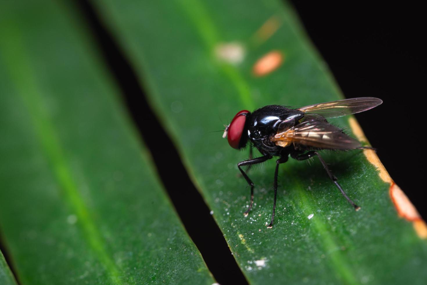 Makroansicht der Fliege auf Blatt foto