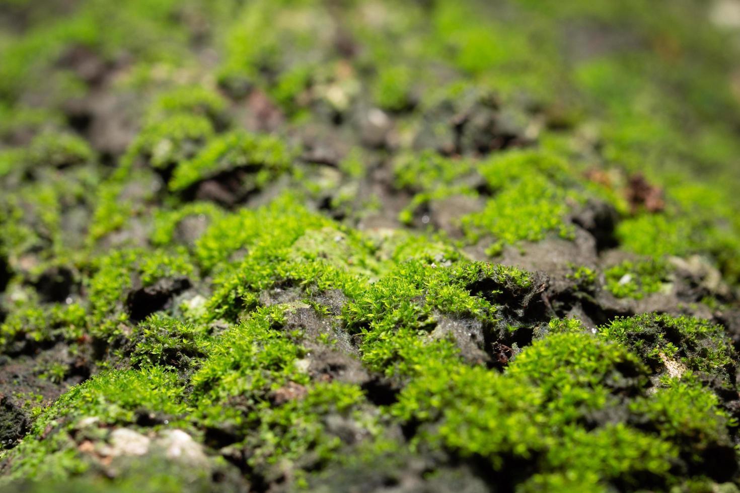 Makromoos auf der Oberfläche eines Baumes in der Natur foto
