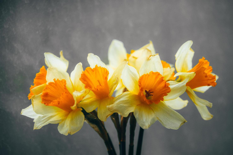 Narzissenblüten in einer Vase foto