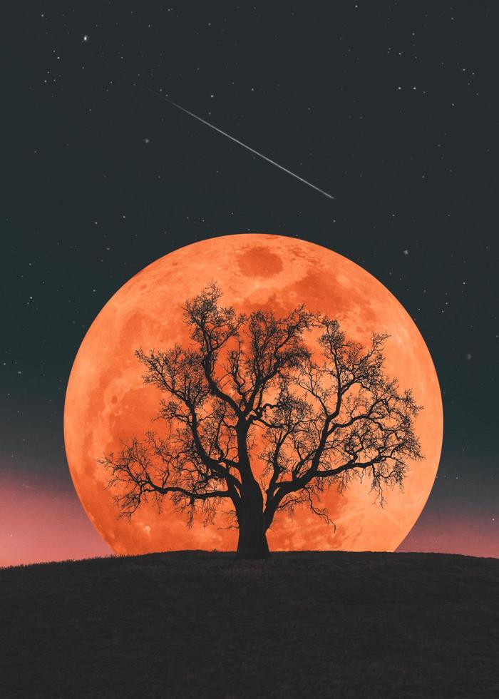 Mondaufgang auf dem Hintergrund eines einsamen Baumes foto