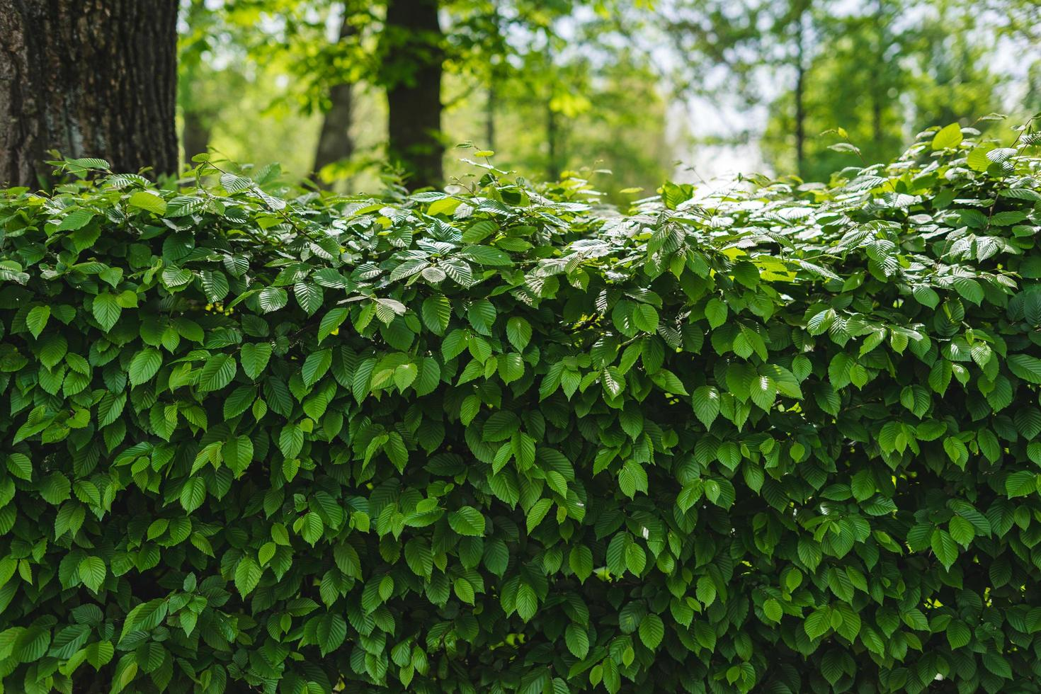 grüner Pflanzenhintergrund foto