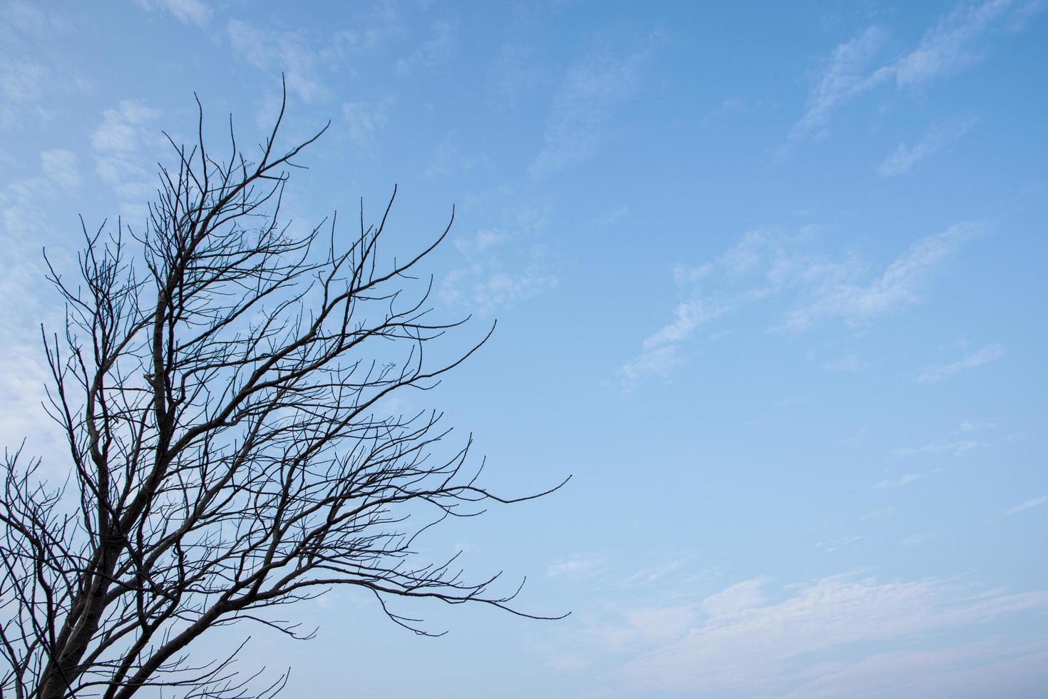 toter Baum reicht in Richtung Himmel foto