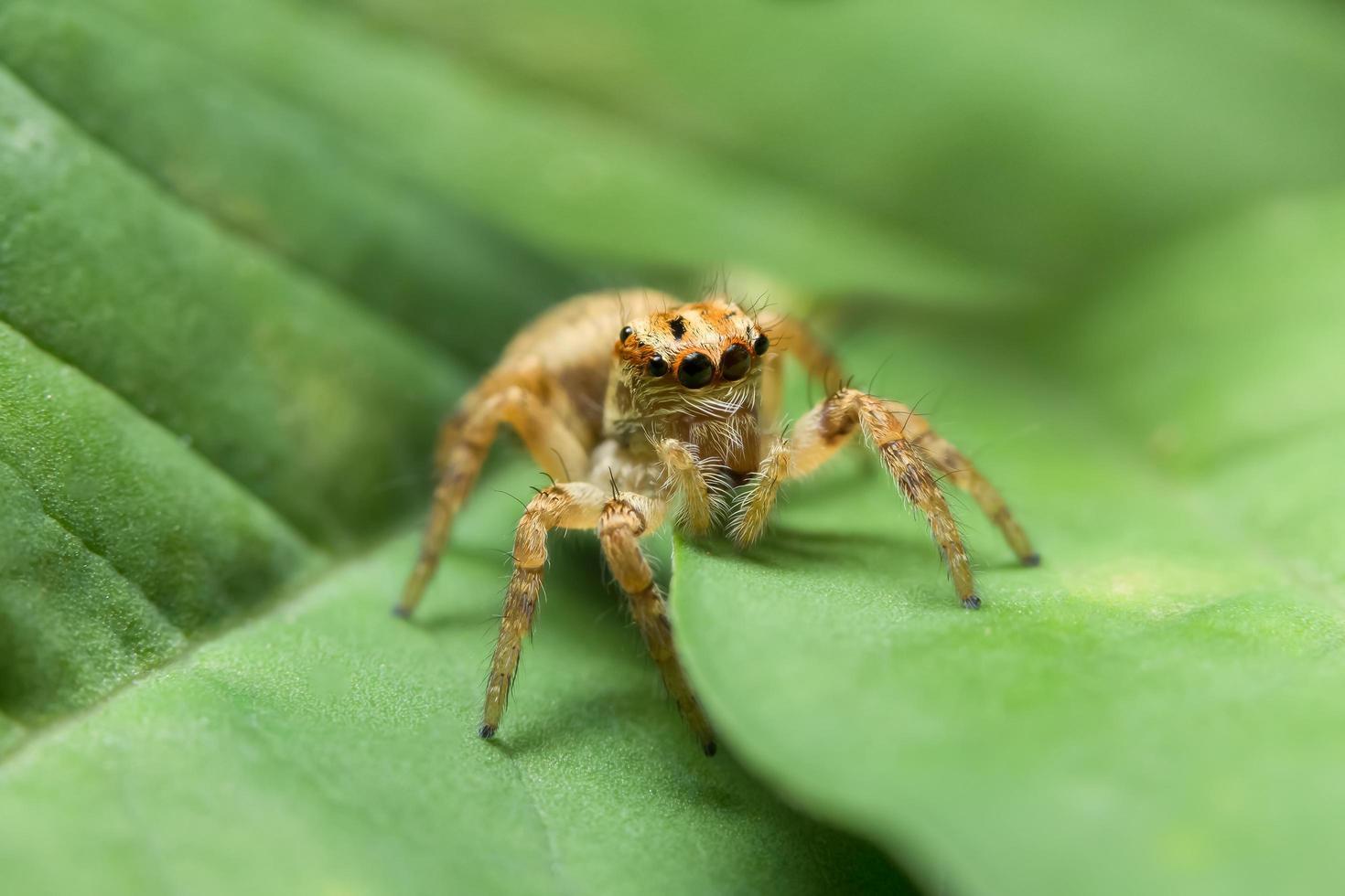 braune Spinne auf grünem Blatt foto