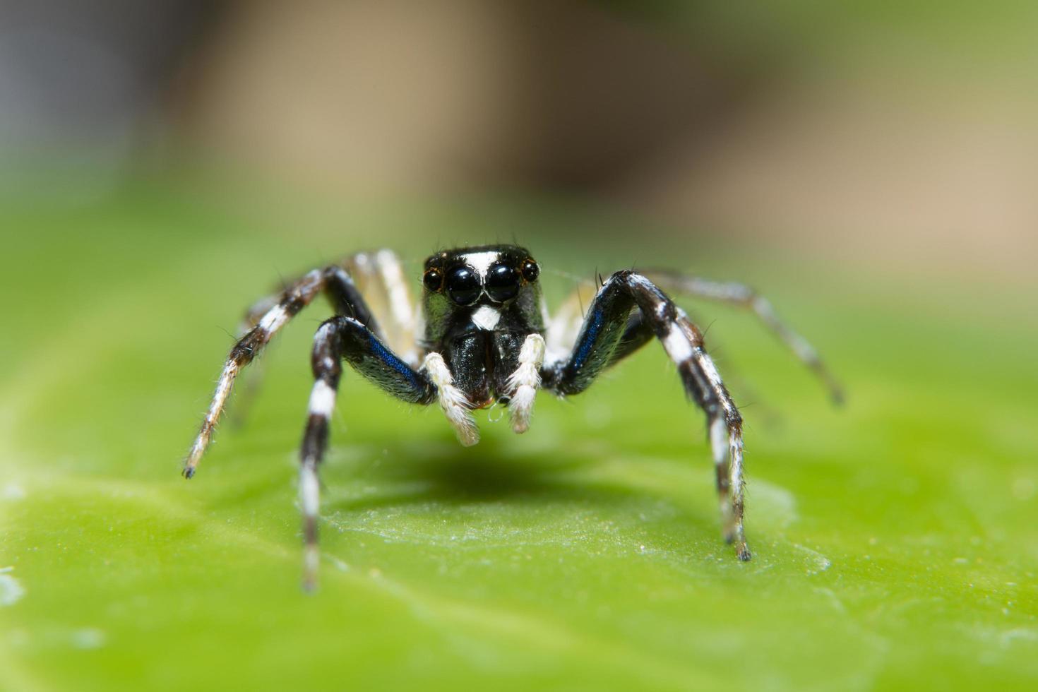 Nahaufnahme der Spinne auf grünem Blatt foto