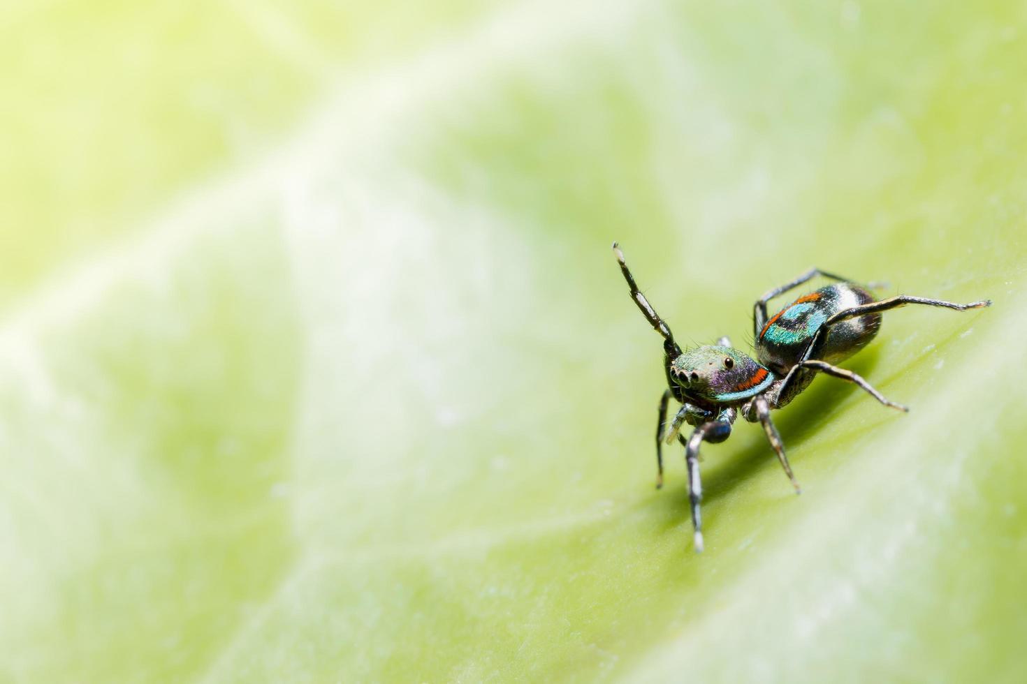 Spinne auf grünem Blatt foto