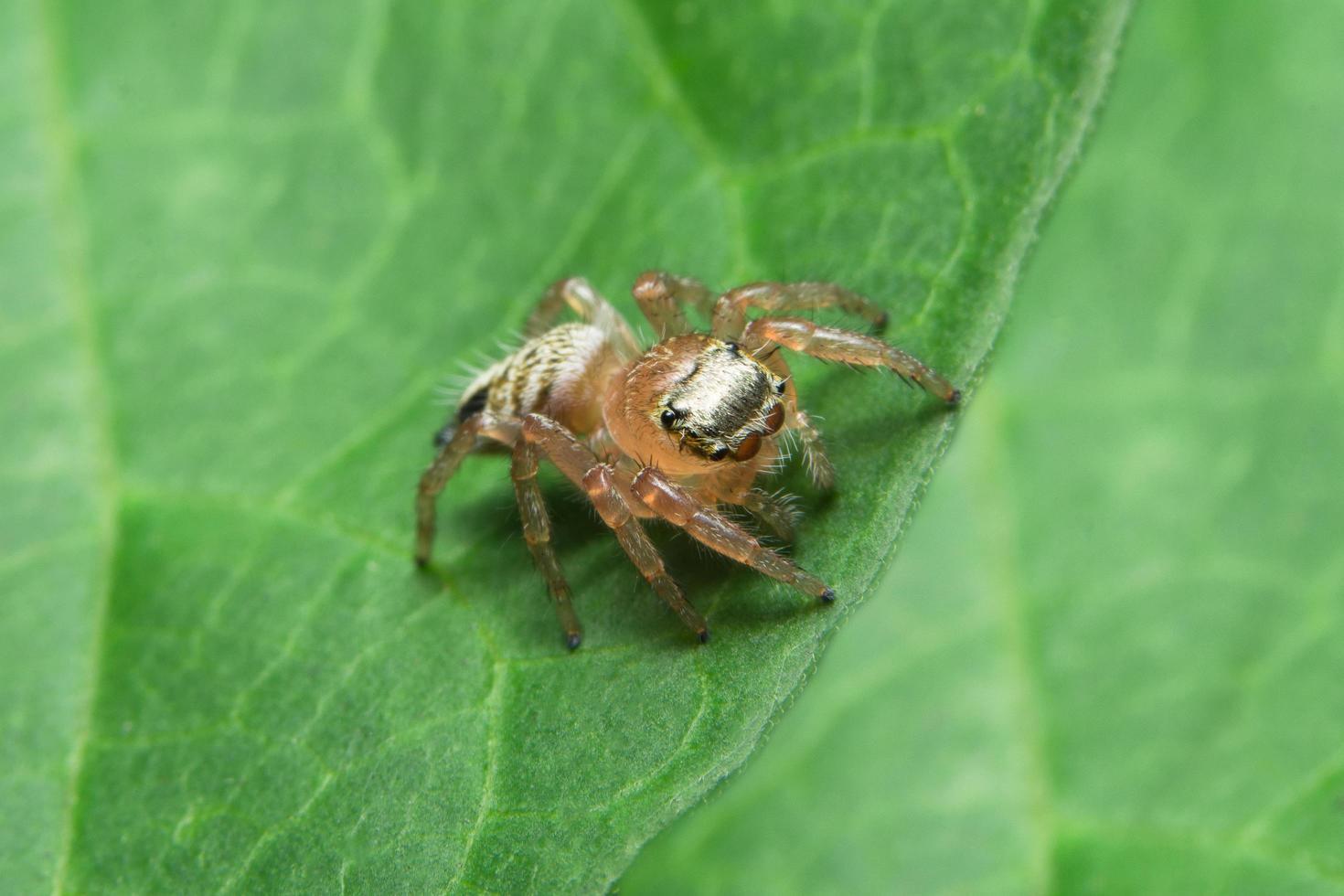 Nahaufnahme der Spinne auf Blatt foto