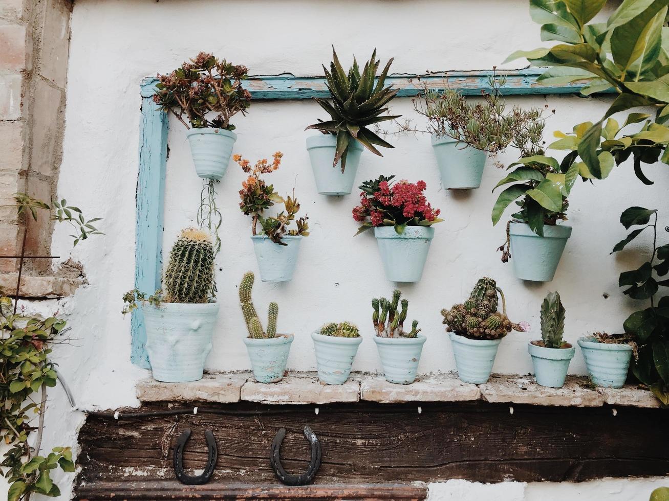 Pflanzen in Töpfen an der Wand foto