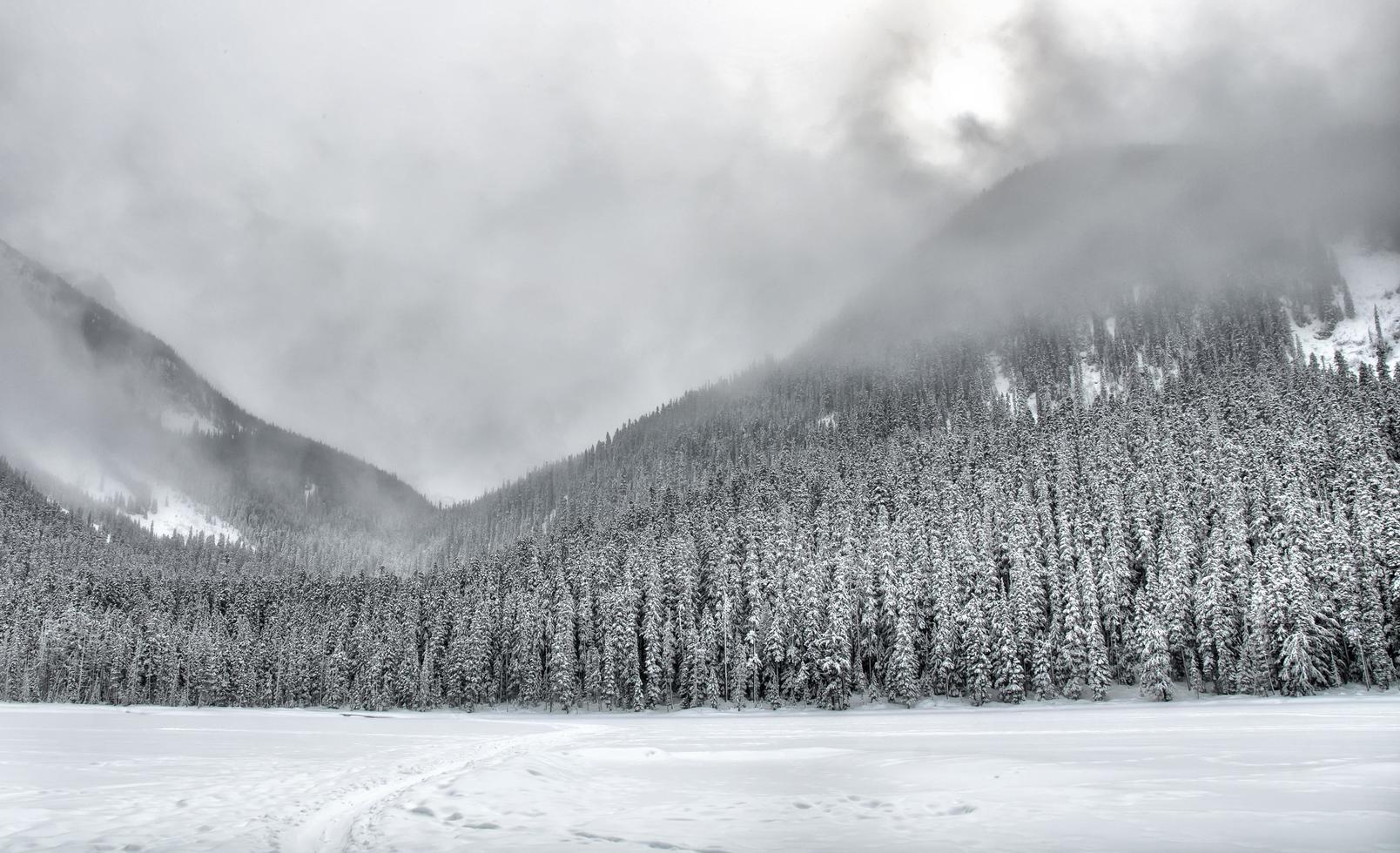 schneebedeckte baumbedeckte Berge foto