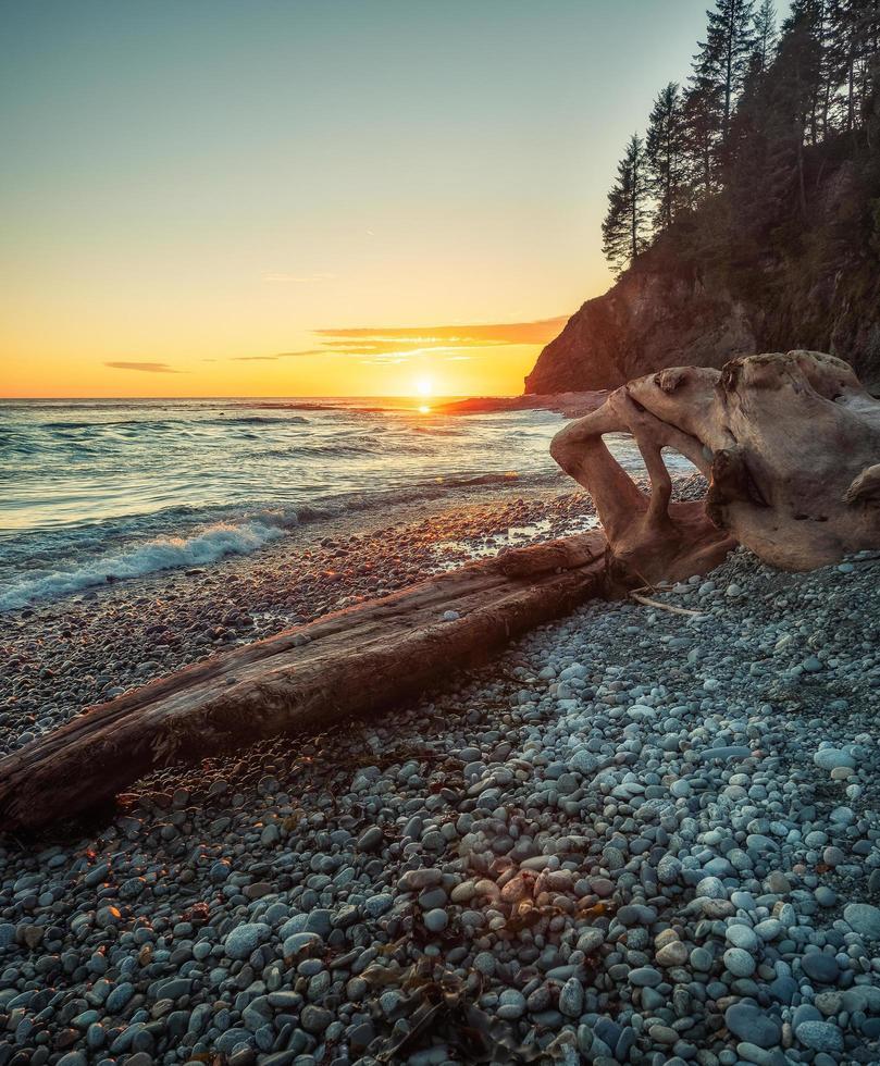 Treibholz an der Küste während des Sonnenuntergangs foto