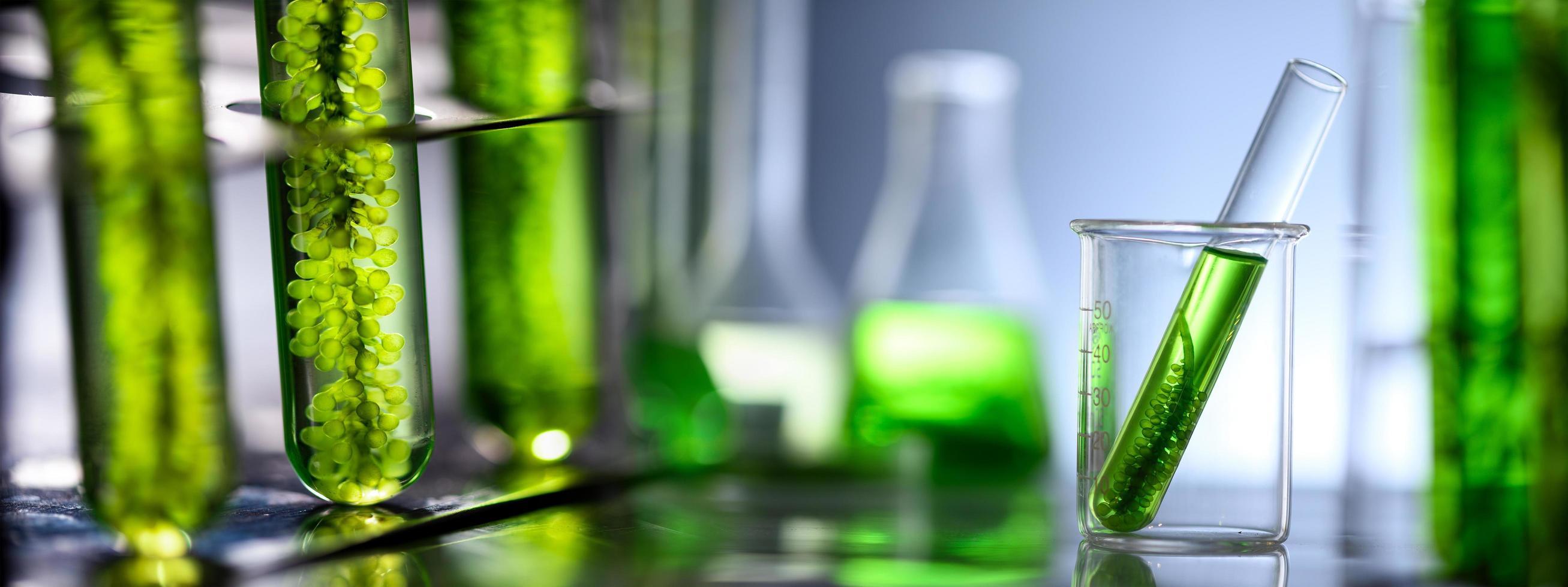 Photobioreaktor im Labor von Algenbrennstoff foto