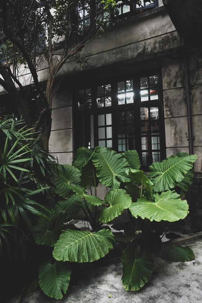 großer Terrassengarten foto