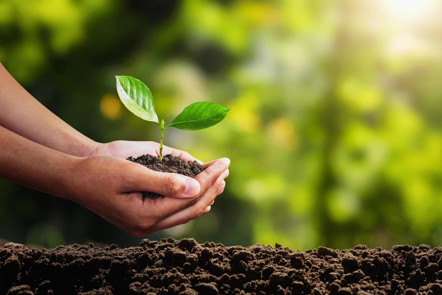 ein Pflanzensämling, der von zwei Händen neu gepflanzt wird foto