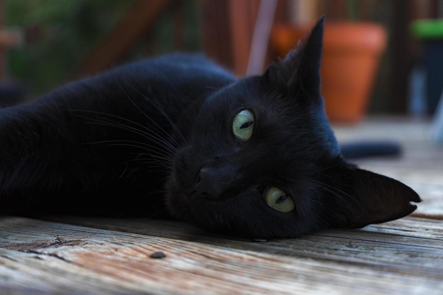 schwarze Katze, die auf einer Veranda liegt foto