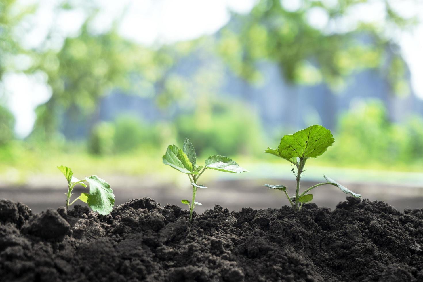 neues Wachstum aus Samen foto