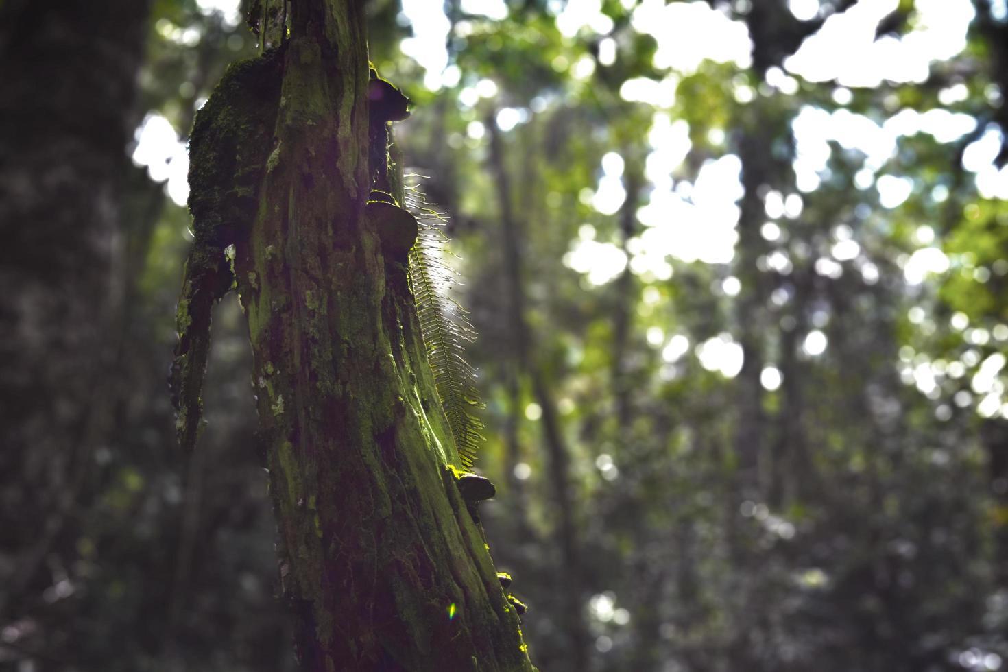 Baum mit Pilzen foto