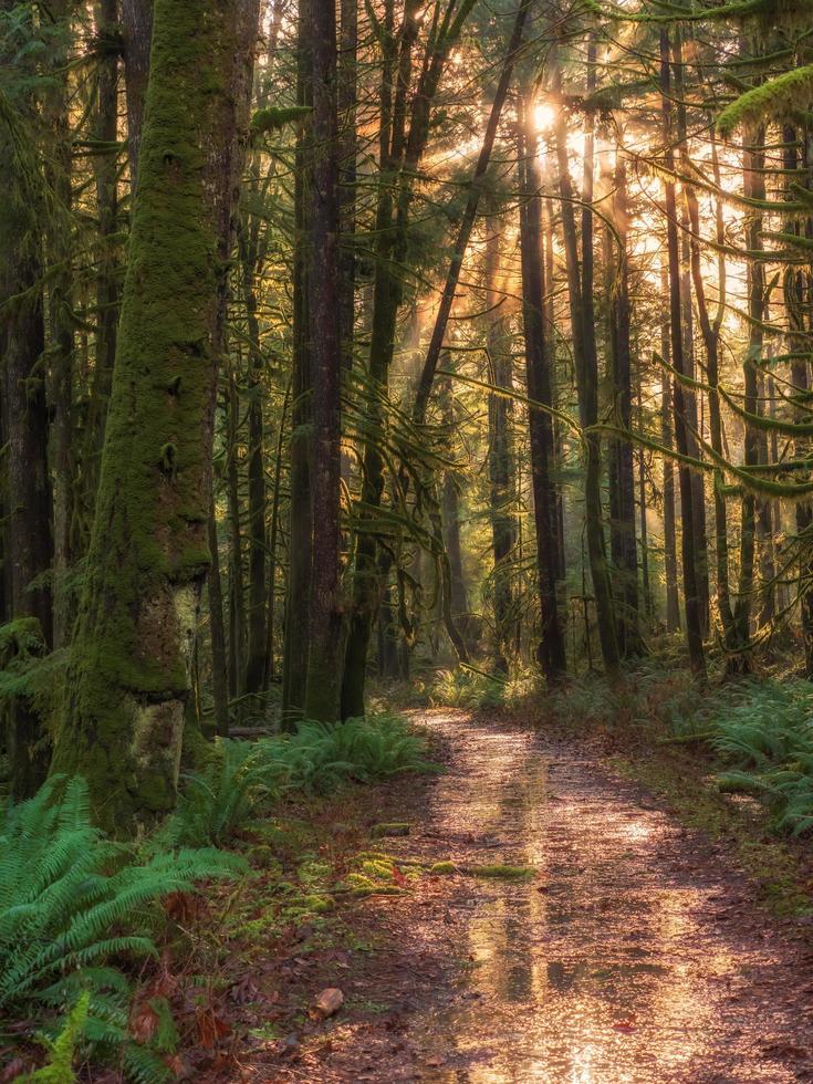 brauner Weg im Wald foto