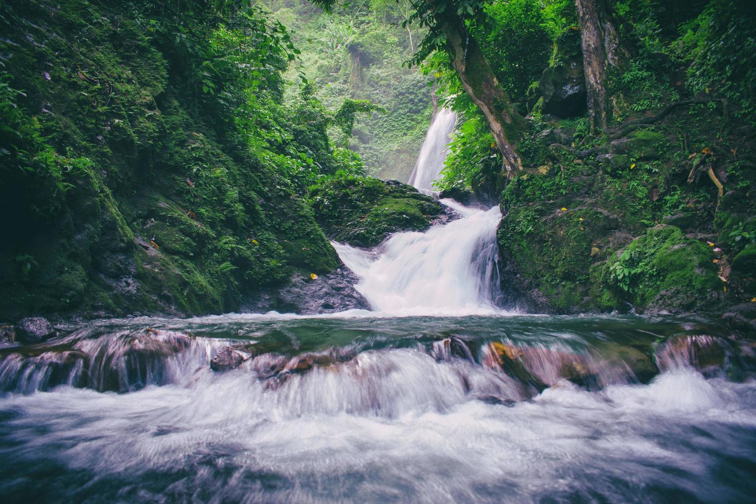 Wasserfall zwischen Bäumen foto