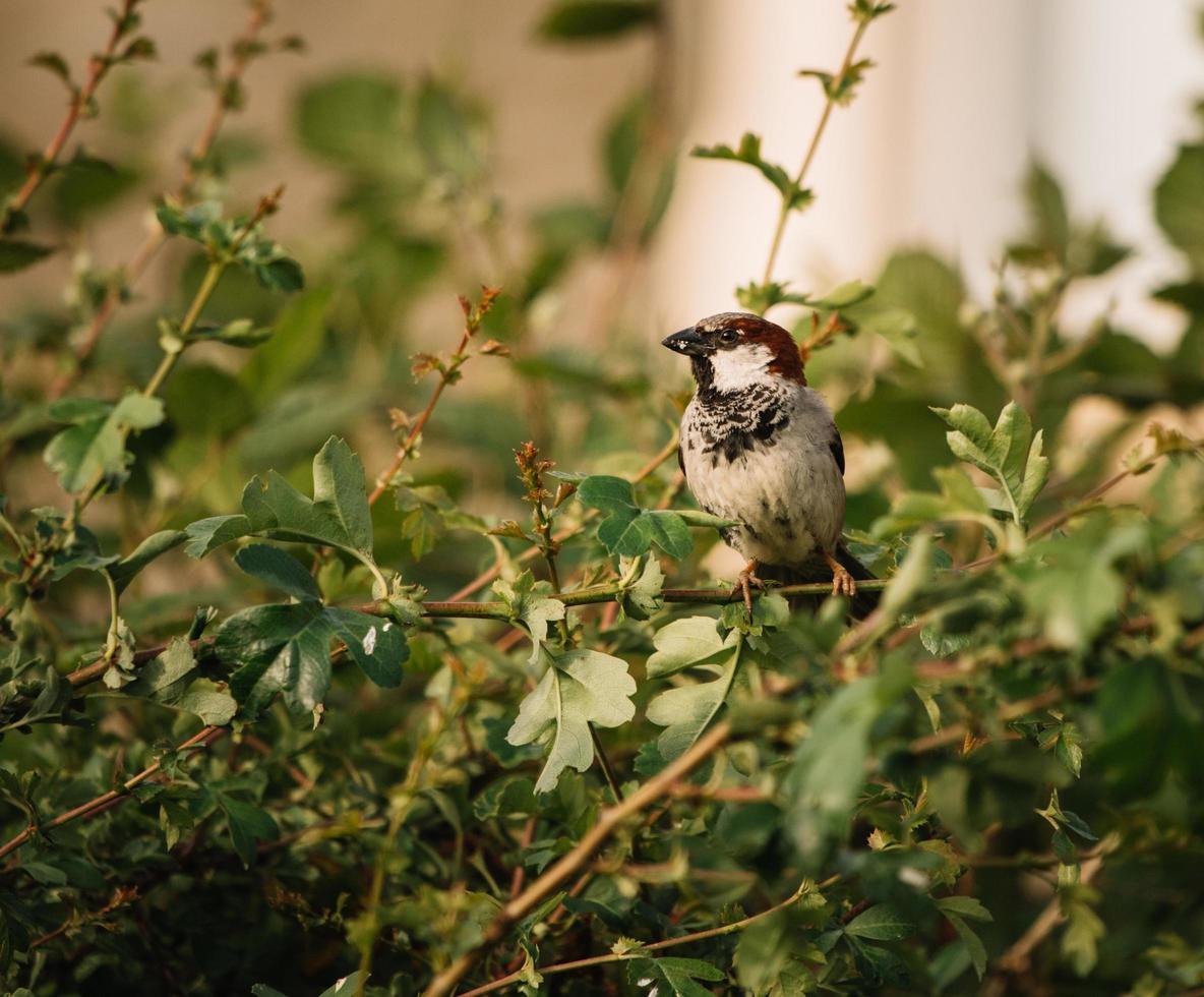 weißer und schwarzer Vogel foto