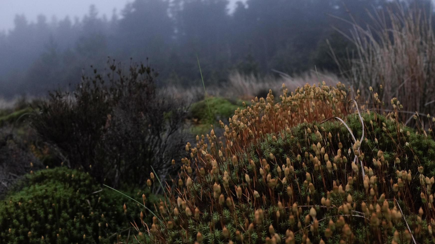 grasbewachsenes Herbstfeld foto