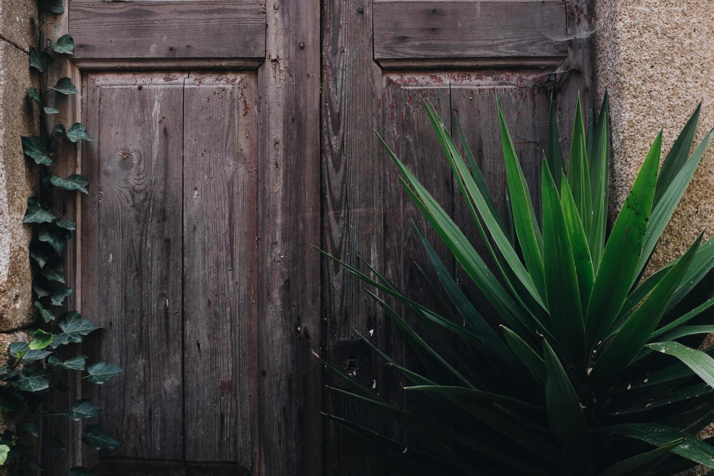 grünblättrige Pflanze foto