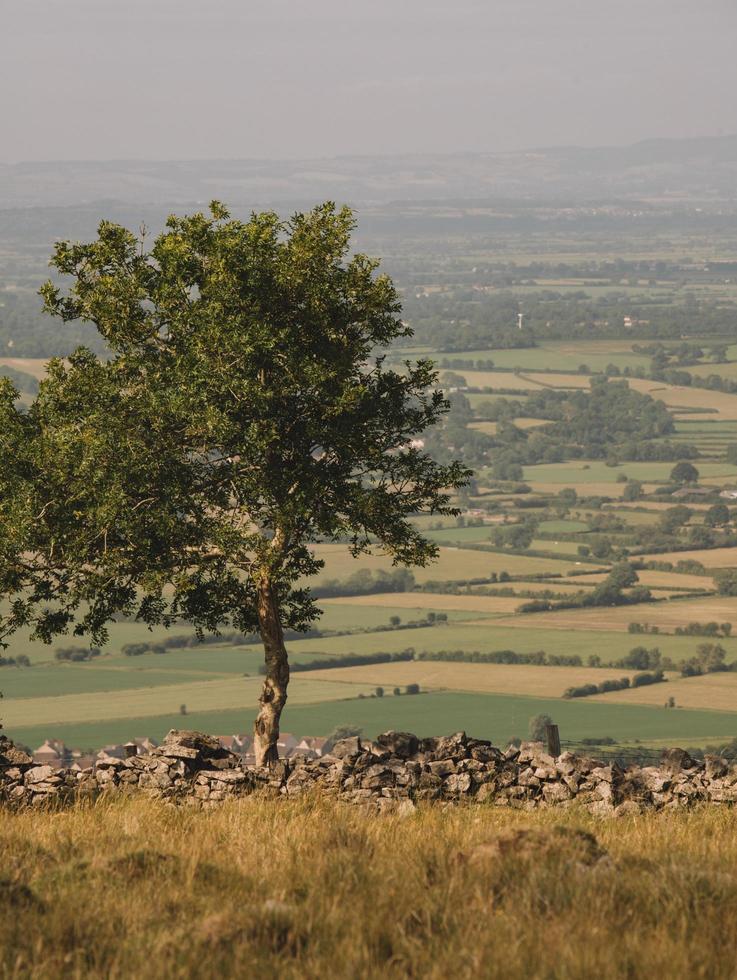 grüner Baum auf grüner Wiese foto