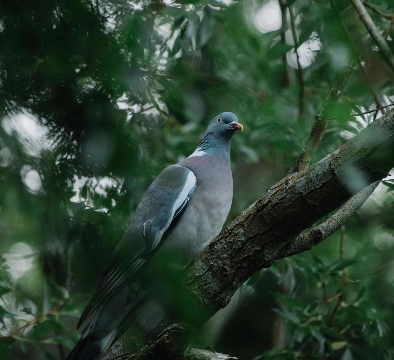 blauer und weißer Vogel auf Ast foto