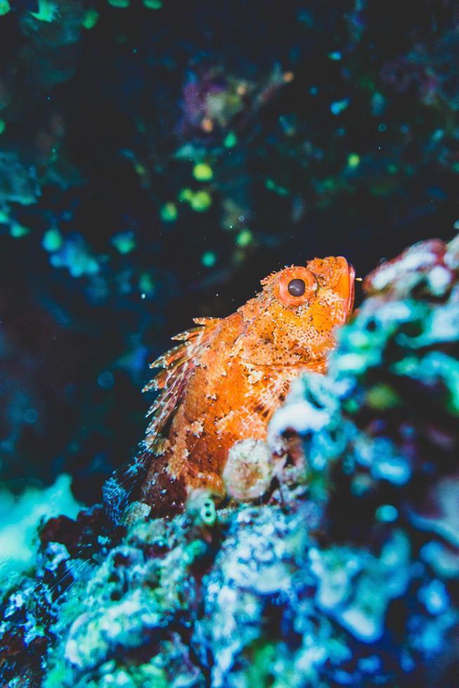 Orangenfisch unter Wasser foto