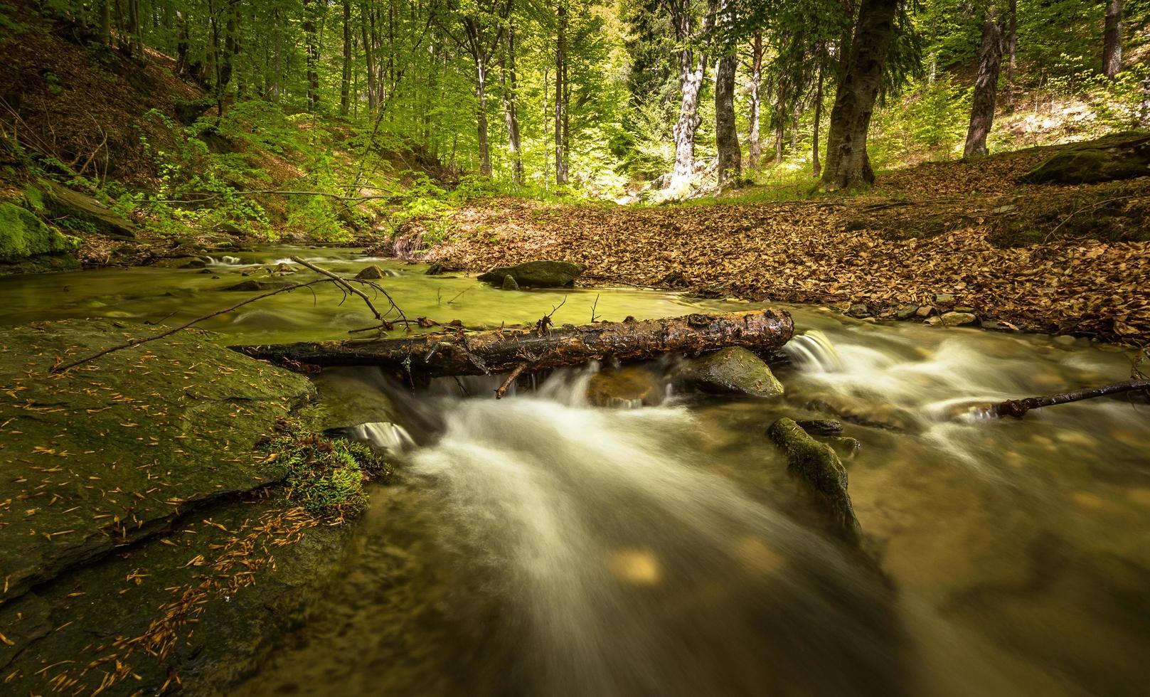 Wasserstrom im Wald foto