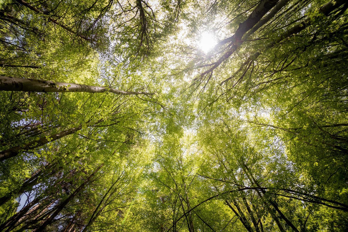 Fotografie von Bäumen foto