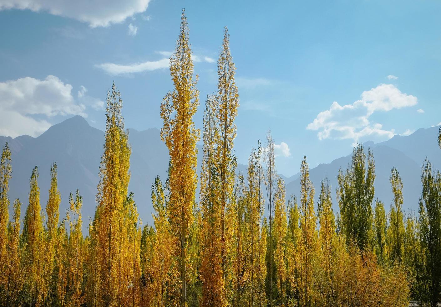 gelbe und grüne Blätter foto