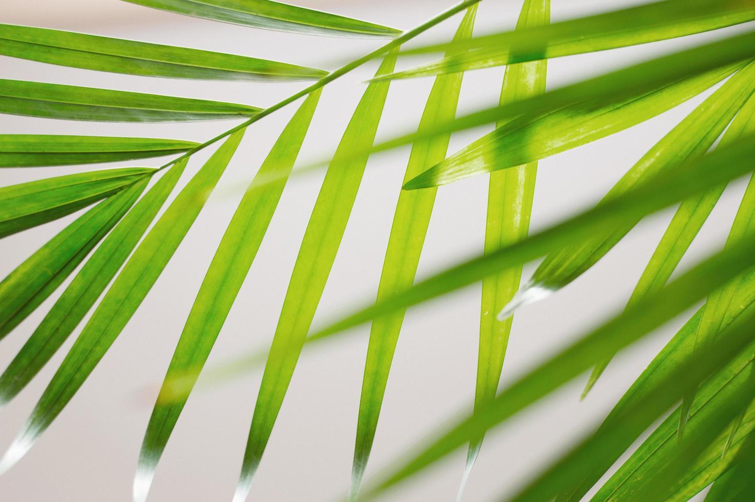 grüne Palmblätter foto