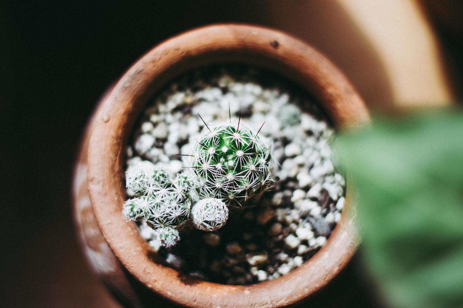 Kaktustopf, Draufsicht foto