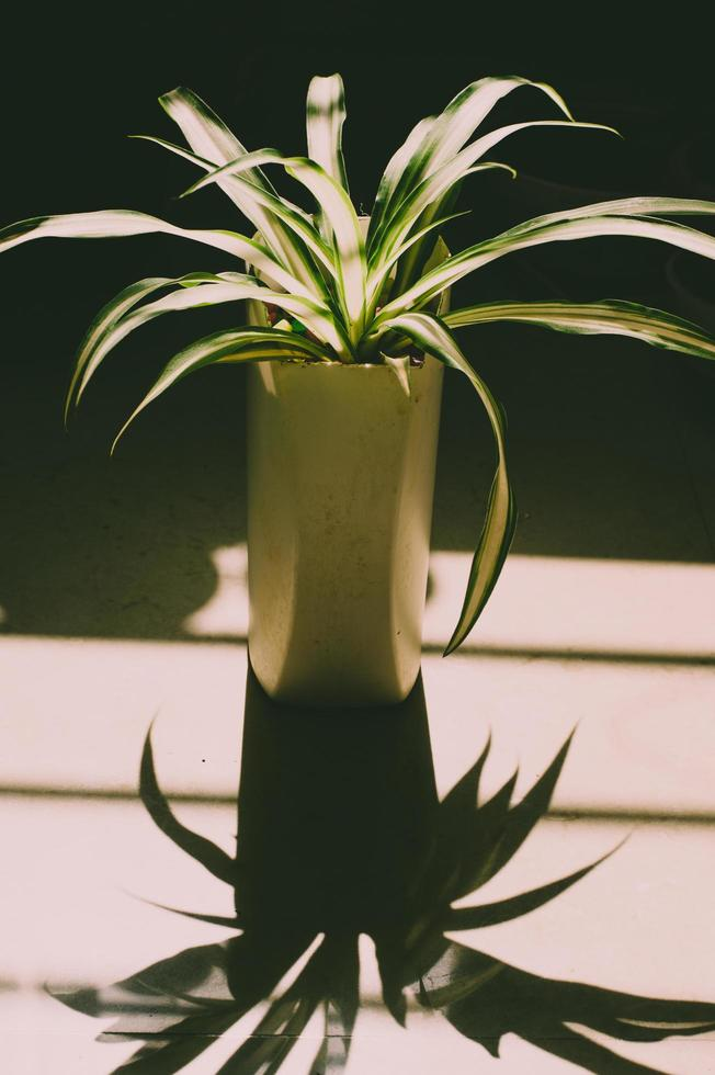 grüne tropische Zimmerpflanze foto