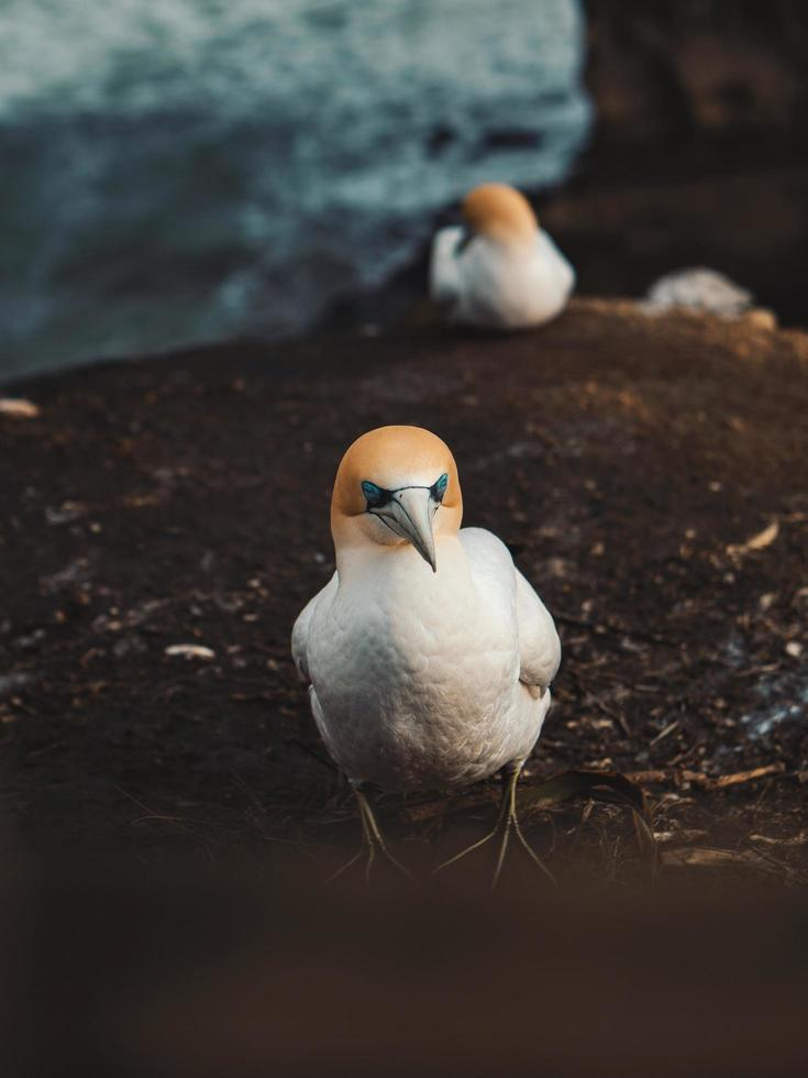 weißer und orange Seevogel foto