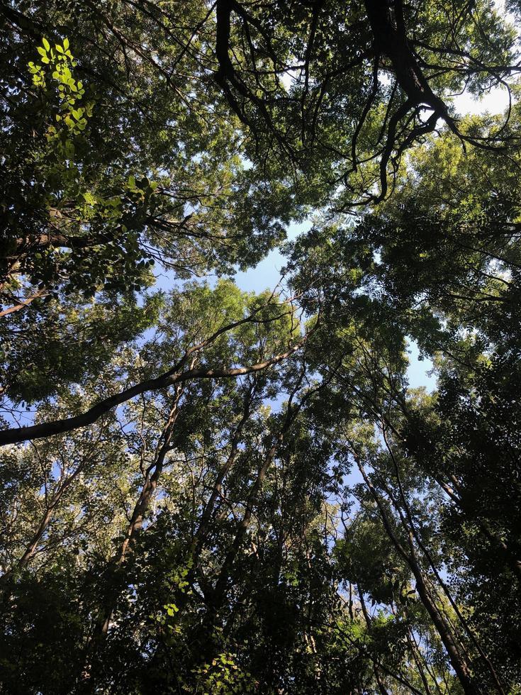 Wurmperspektive auf grüne Bäume foto