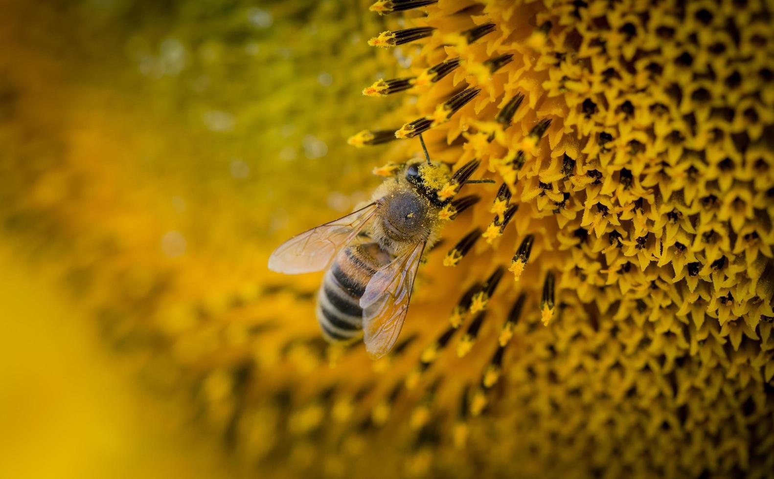 Makrofoto einer Biene foto