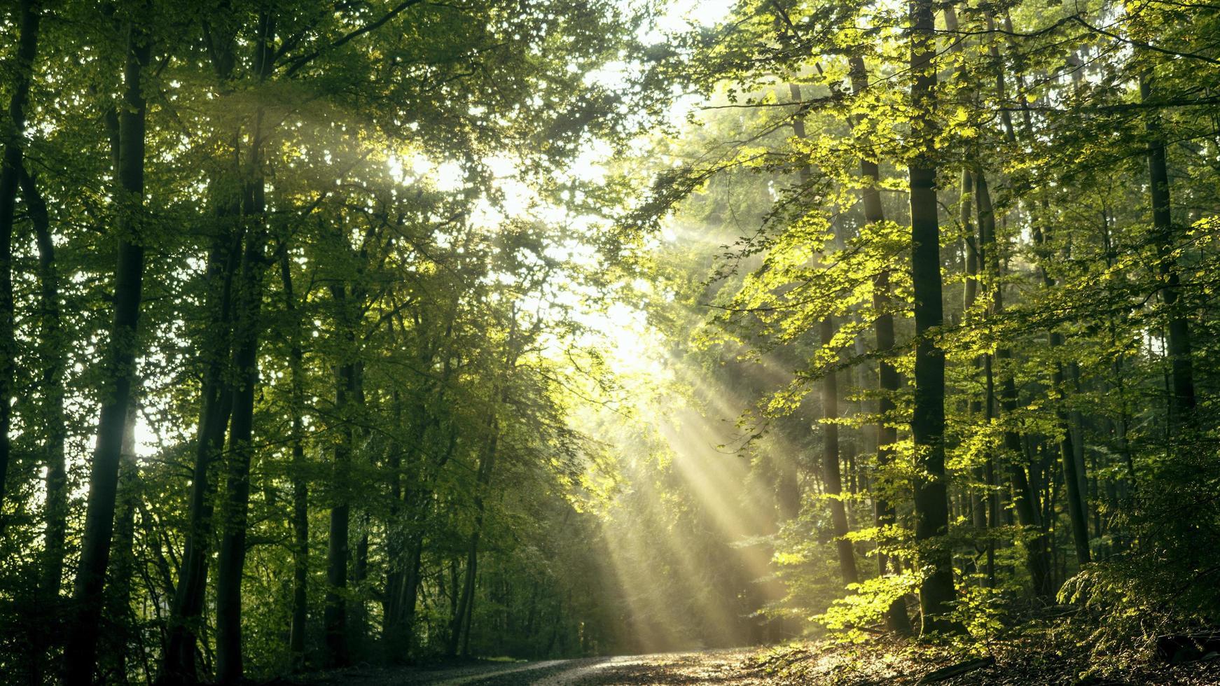Sonne scheint durch Bäume foto
