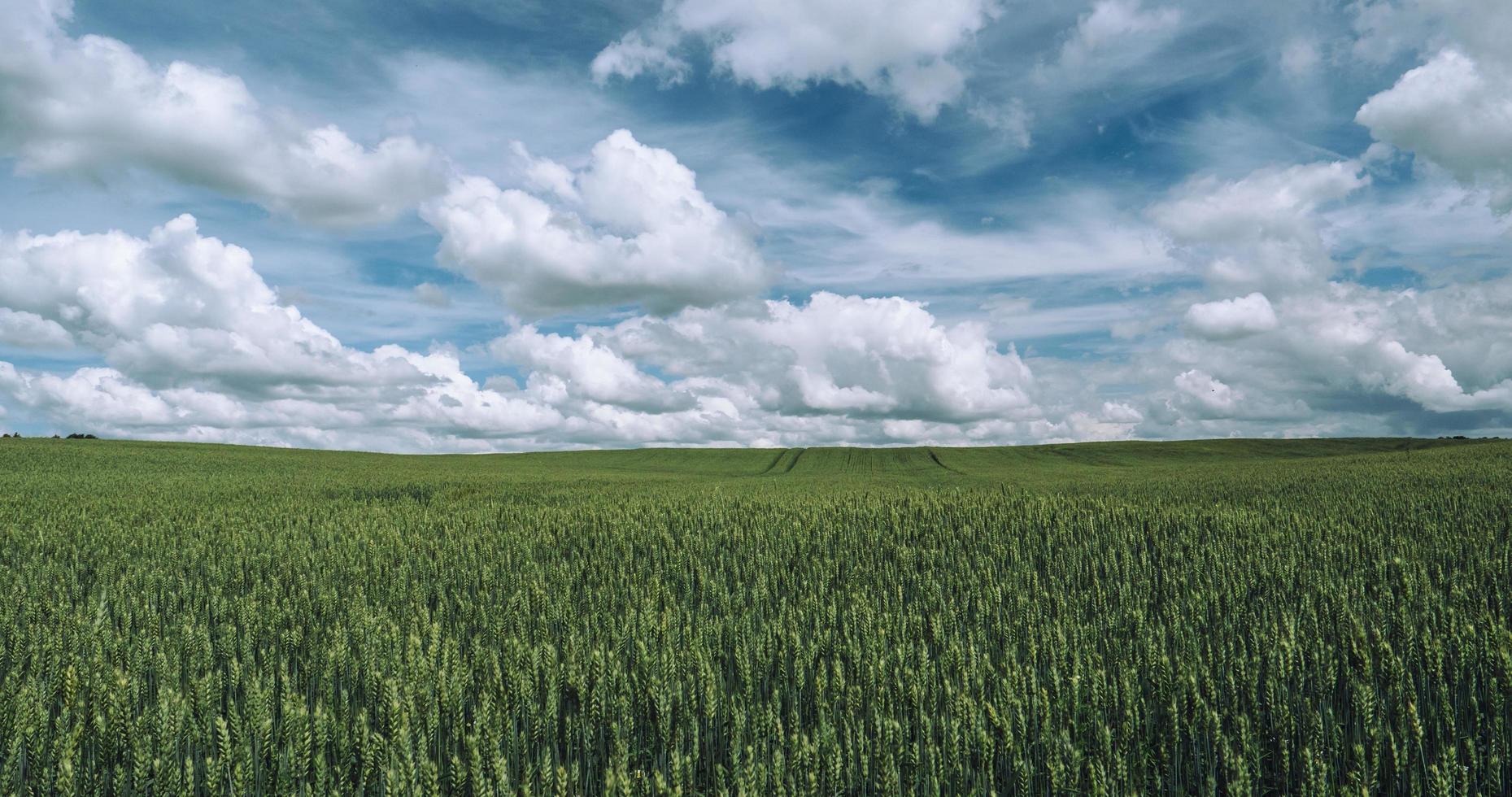 grüne Wiese unter blauem Himmel mit Wolken foto