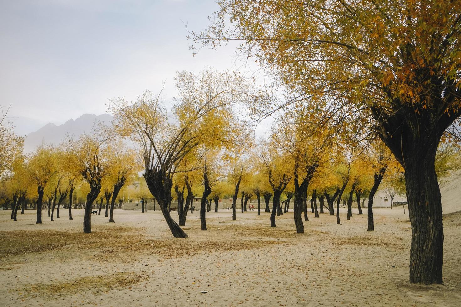 Landschaftsansicht der Bäume im Herbst foto