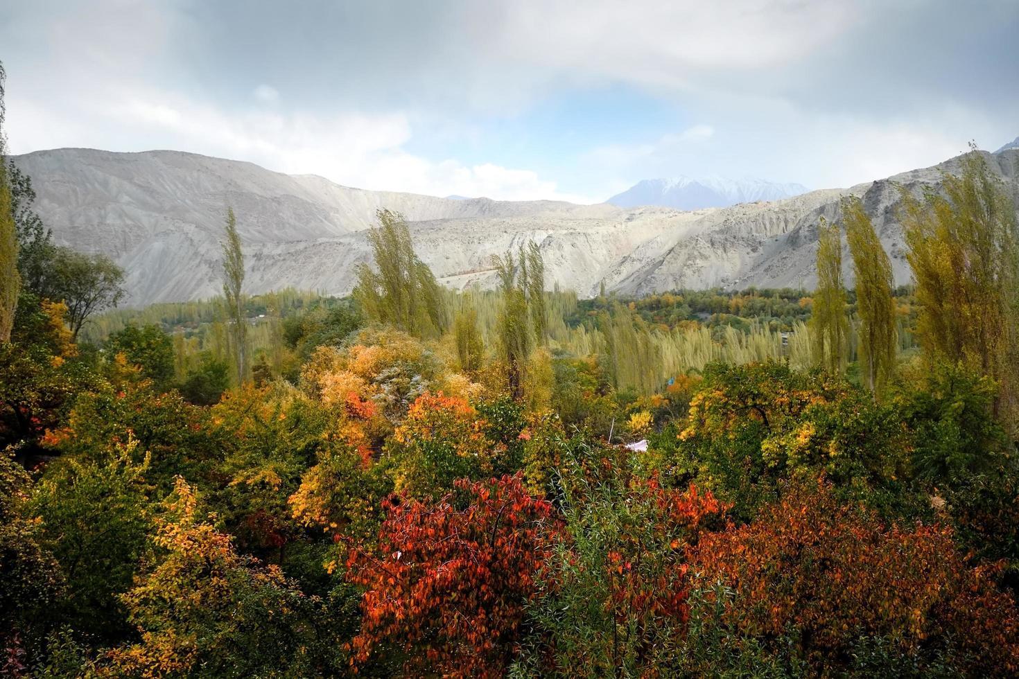 Herbstszene von Laub foto