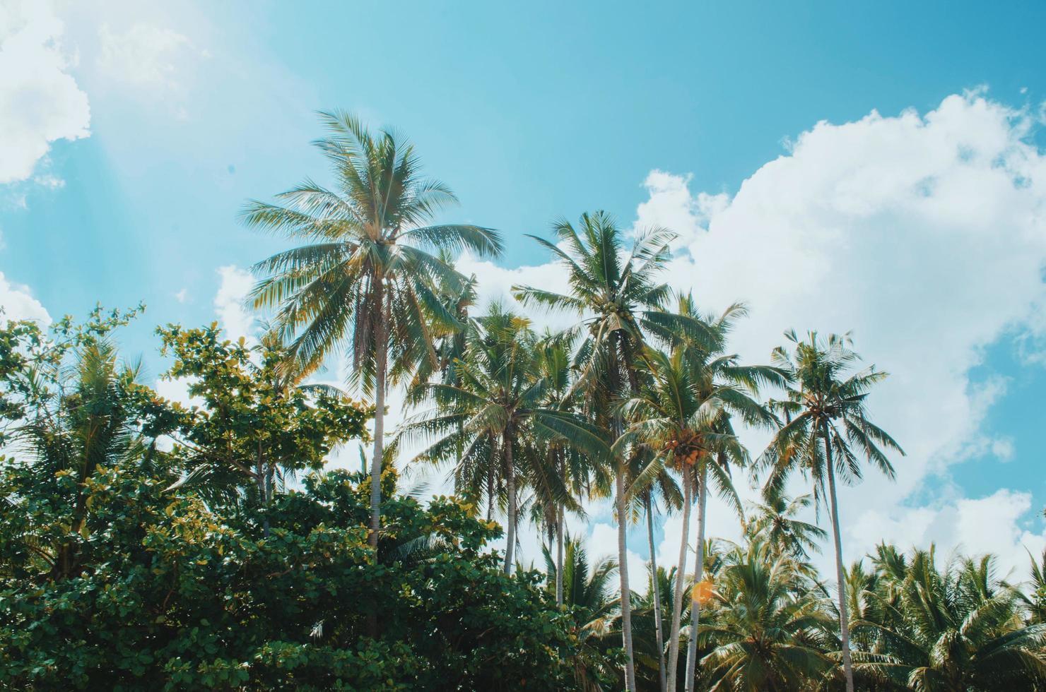 grüne Kokospalmen foto
