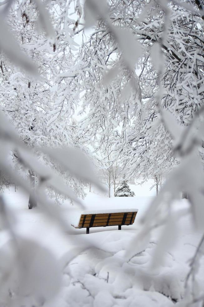 braune Bank mit Schnee bedeckt foto