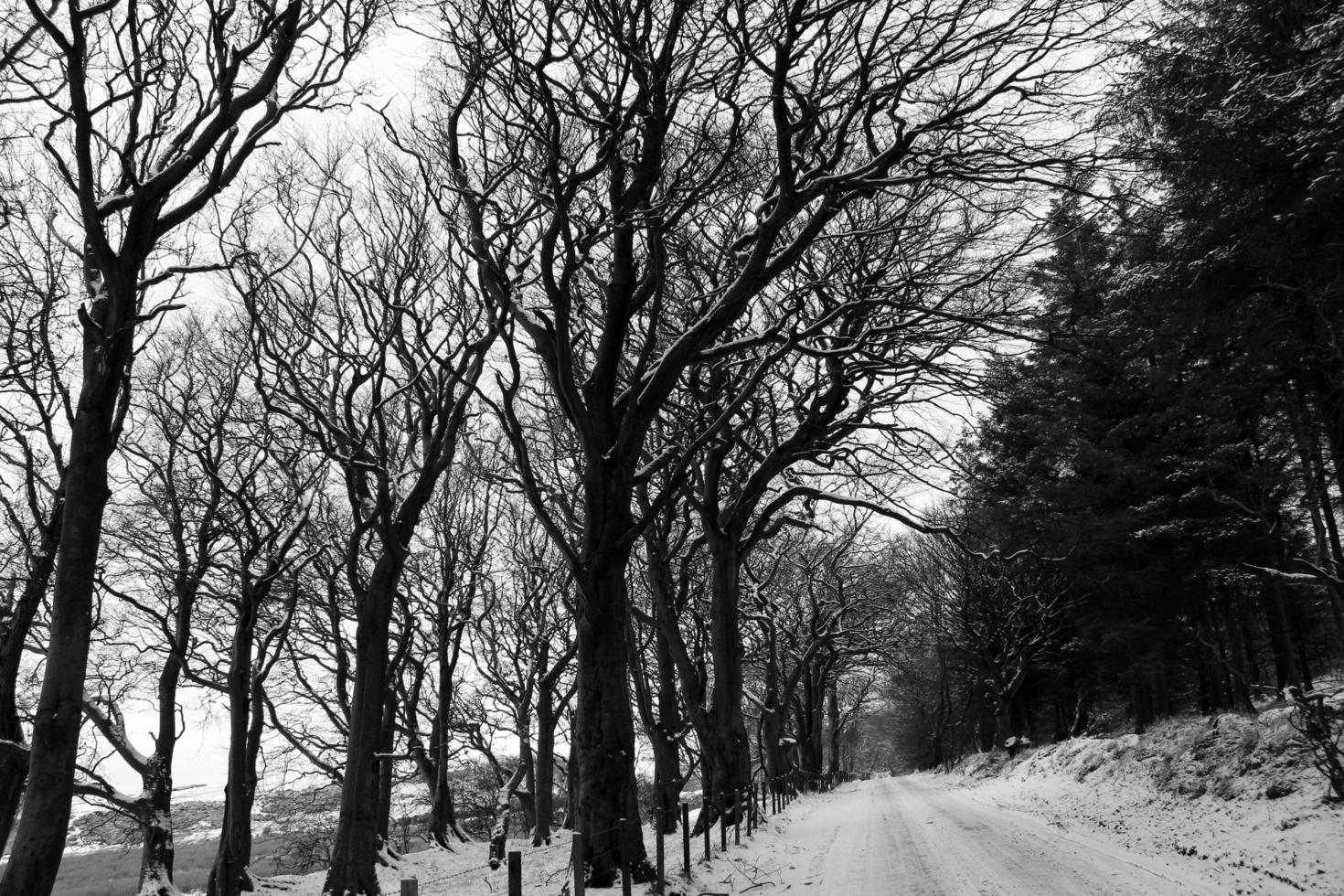 Graustufenfoto eines schneebedeckten Feldes mit kahlen Bäumen foto