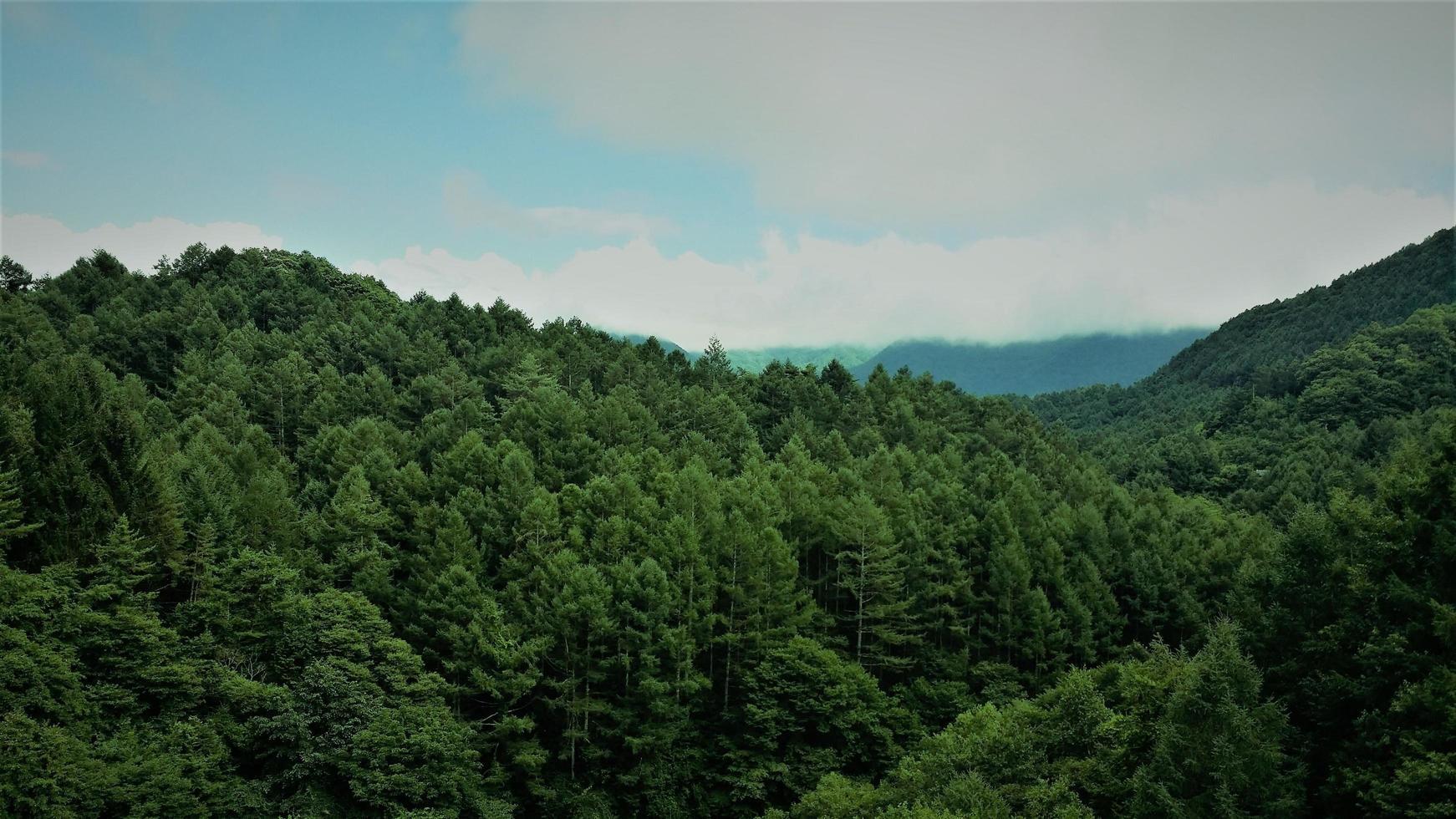 Luftbild von baumbedeckten Bergen foto