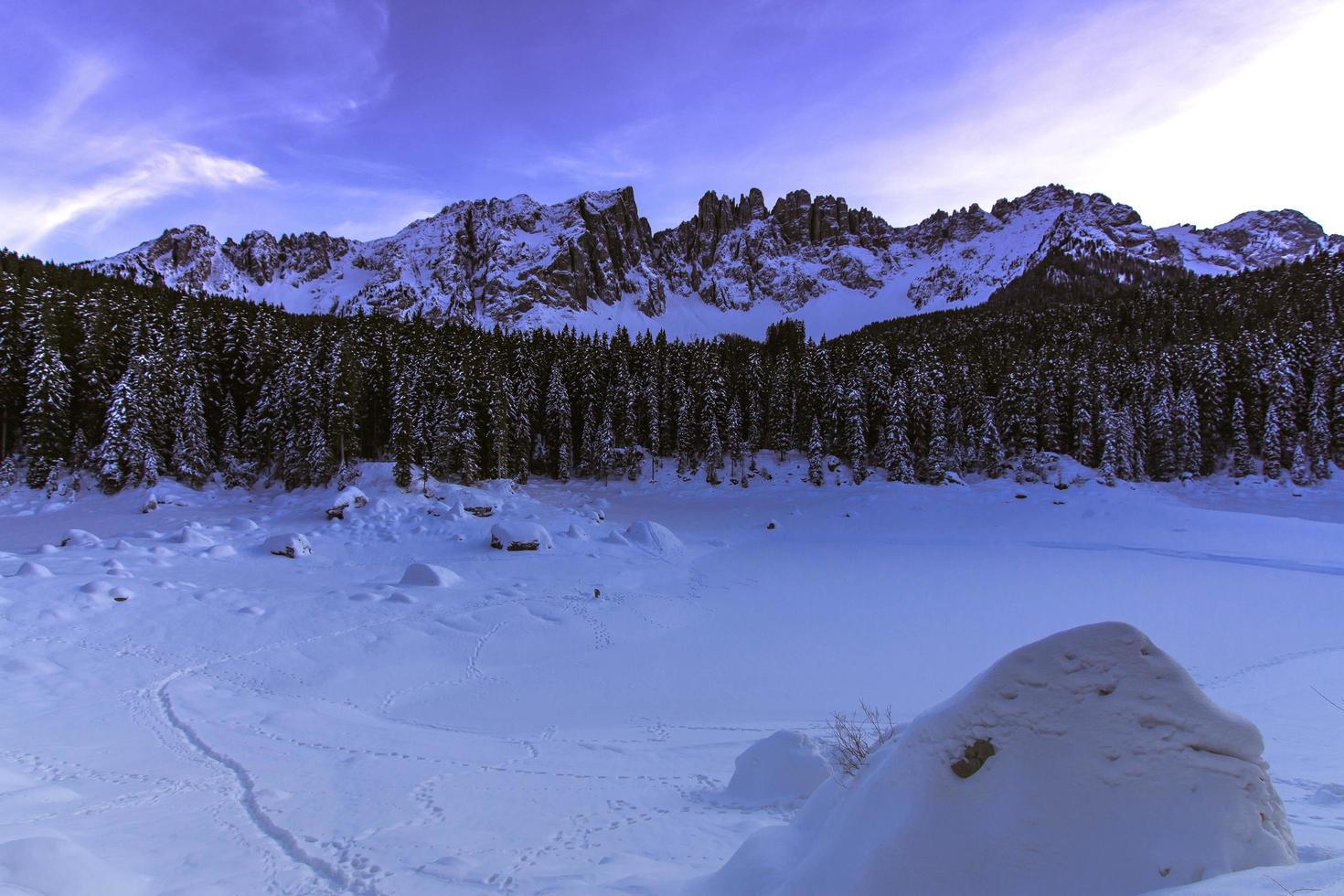 Bäume und schneebedeckte Berge foto