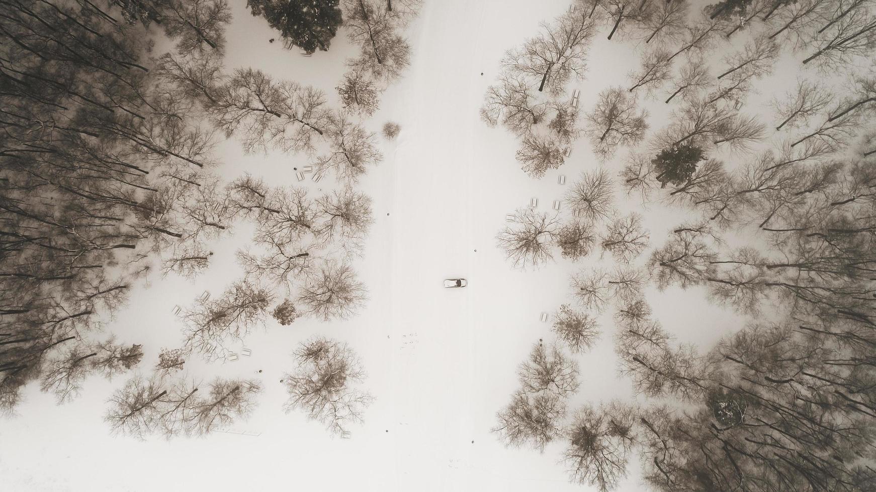 Luftaufnahme des Winterwaldes foto