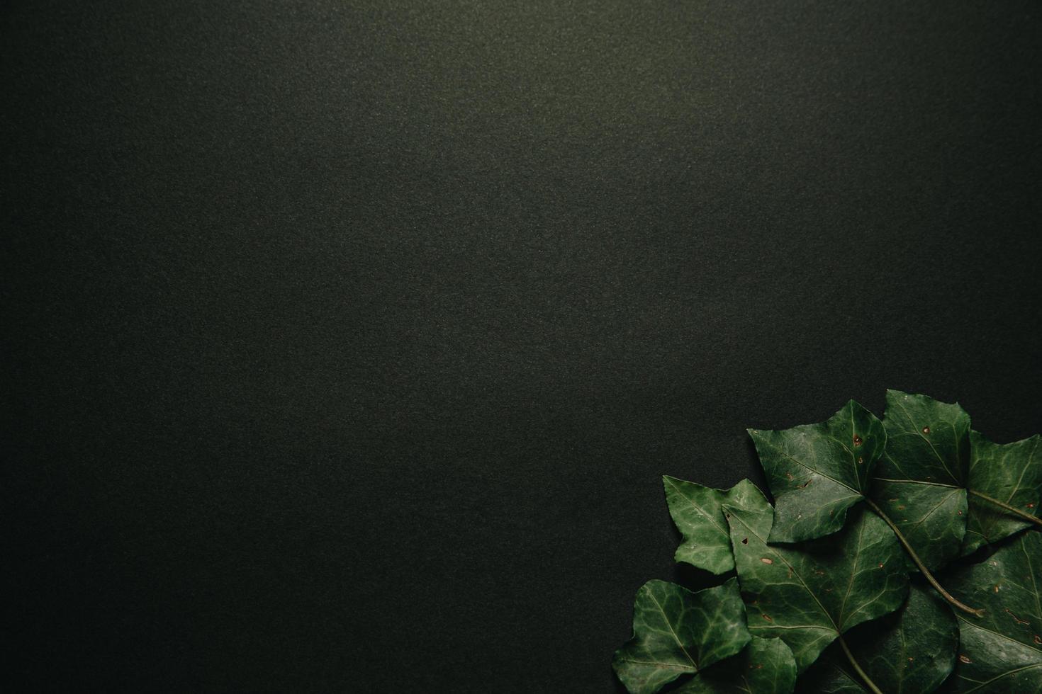 dunkler Hintergrund mit grünen Blättern in der Ecke foto