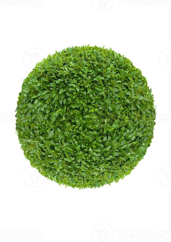 Kugel aus grünen Blättern foto